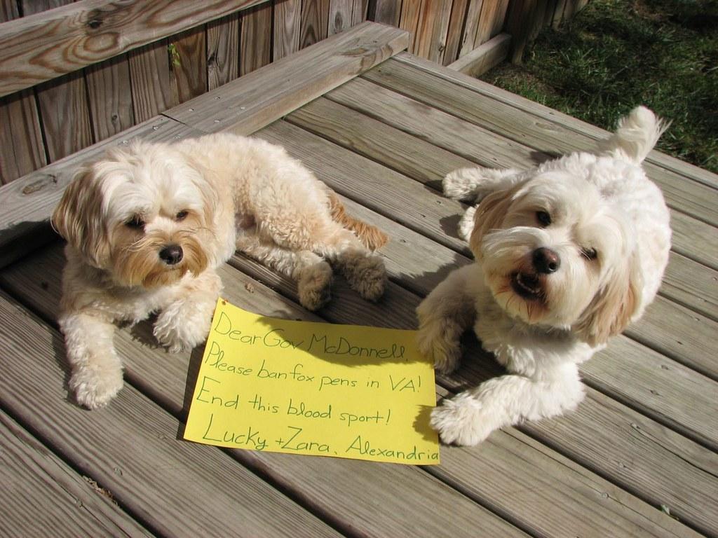 Humane Society Dogs For Adoption Hamilton