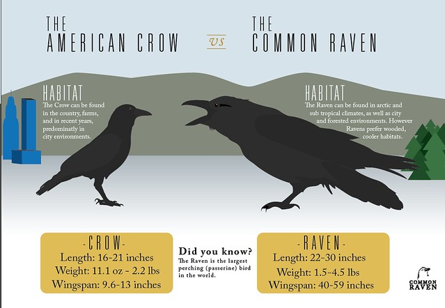 crow vs raven | Explore Aaron Boyle's photos on Flickr ...