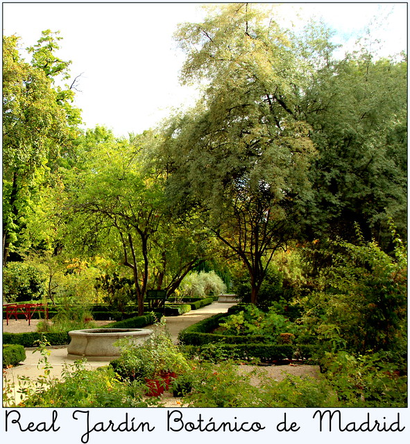 Real jard n bot nico de madrid explore m martin vicente for Jardin botanico madrid