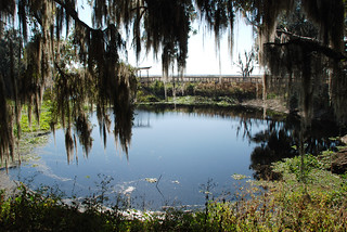 Alachua Sink from the La Chua Trail | by Visit Gainesville