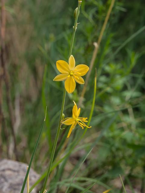 Arizona wildflowers nude-2366