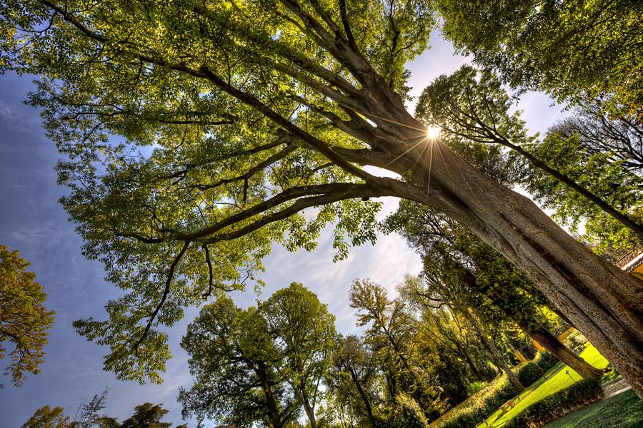 Raggi di sole al giardino della gherardesca giuseppe for Giardino 3d gratis italiano