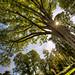 raggi di sole al giardino della gherardesca