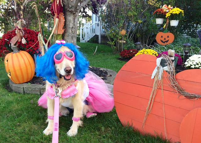 Dog Dressed Like Katy Perry Flickr Photo Sharing