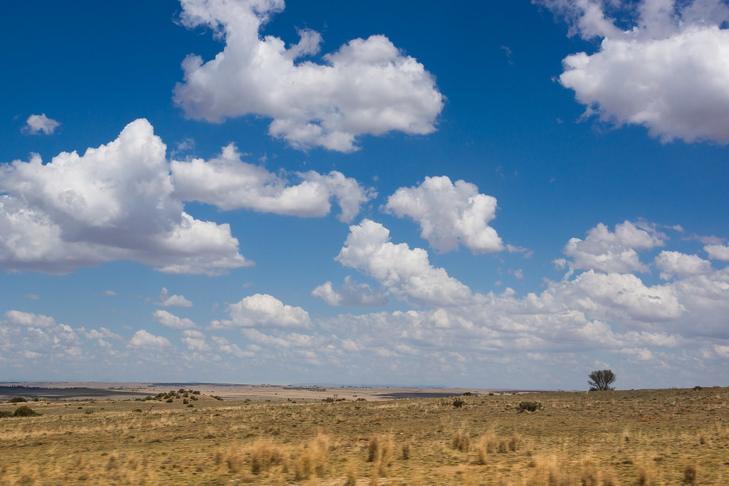 African Plains | A surprising proportion of South Africa ...