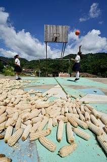 NP Honduras basketball | by CIAT International Center for Tropical Agriculture