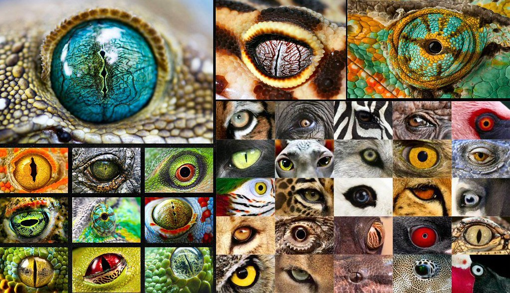 biodiversity of the animal kingdom Biodiversity means variety within and among living things  there are 5 main  kingdoms: animals, plants, fungi, protists (mainly single cells) and bacteria.