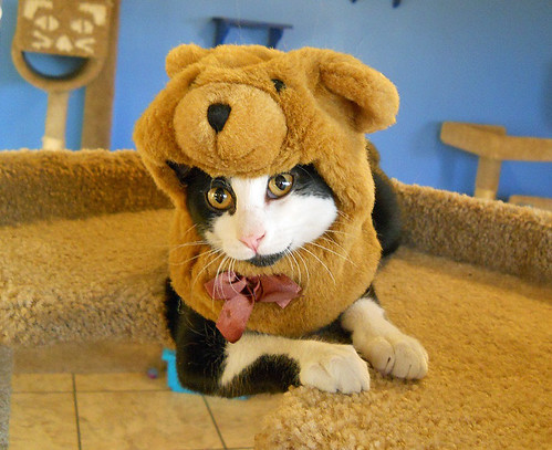 cat wearing teddy bear costume | by Petful.com