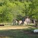 Daisy on donkey guard dog duty (9) - FarmgirlFare.com