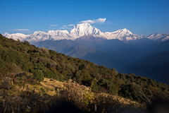 Annapurna range from the path between Gorephani and Tadapani #2