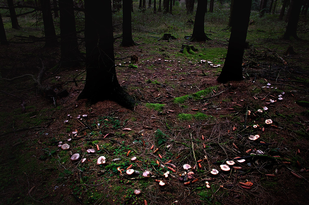 Fairy Ring Hexenkreis Explored Nov 1 2012 Thank Yo