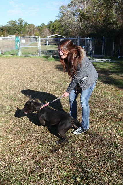 Carteret County Animal Control Dogs For Adoption