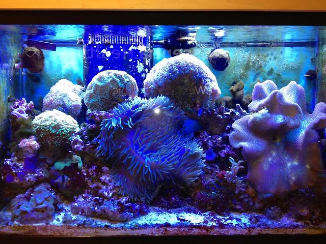 Fish tank explore sharon mollerus 39 photos on flickr for Fish tank camera