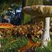 I just love mushrooms! DSC05468a