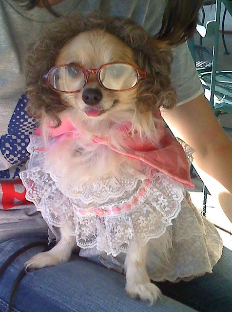 Debbie S Dog Grooming Del Rio Tx
