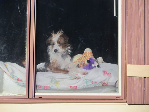 doggie in the window | by hereinmalibu