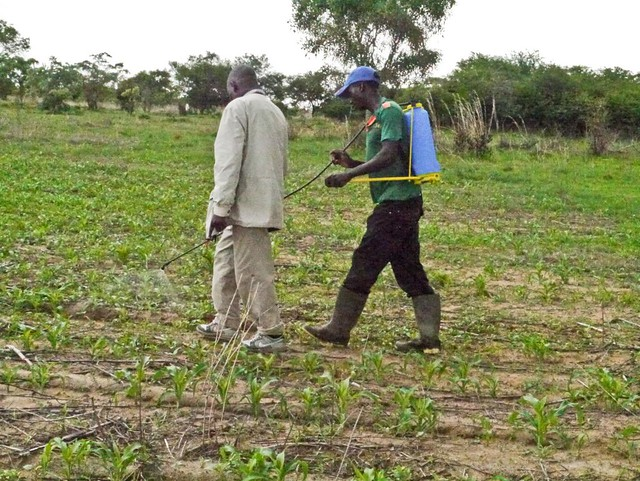 Applying herbicides can be effective and less labour intensive method for smallholder farmers