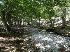 Le chemin rejoint le ruisseau un peu plus loin