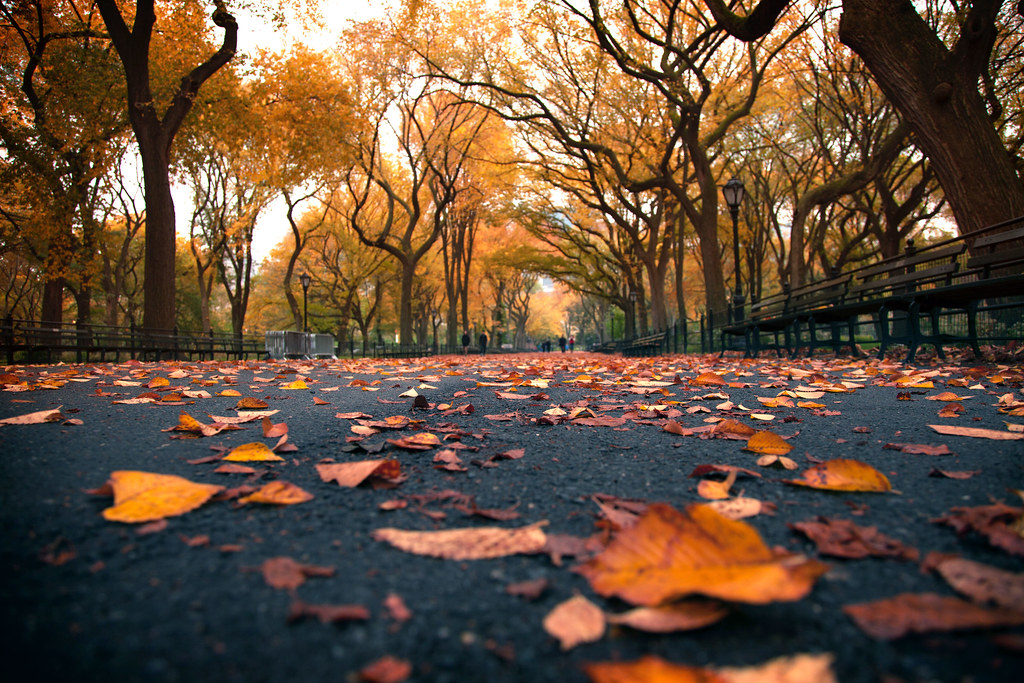 Image result for central park new york city autumn