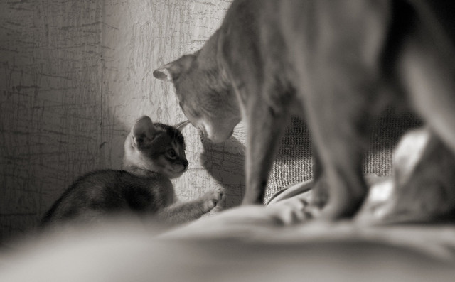 Recent Photos The Commons Galleries World Map App Garden Camera Finder ... Usual Abyssinian Kittens