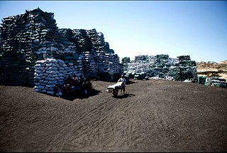 Charcoal exports at the port of Kismayo in southern Somalia. The area was recently occupied by the US-backed Kenyan Defense Forces in an effort to destroy the economic base for the Al-Shabab resistance movement. | by Pan-African News Wire File Photos
