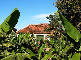 Old House in the Bananas, Tenerife | by Snapjacs