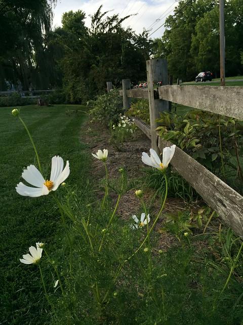 Garden Bloggers Bloom Day: Sept 2016