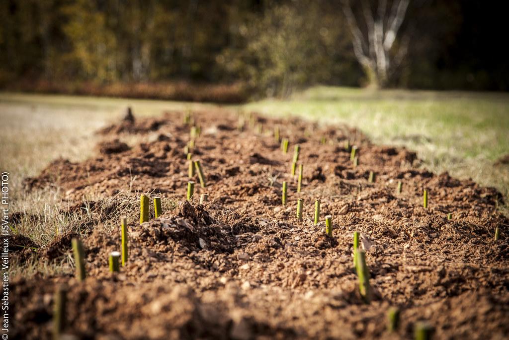 plantation domaine plantation de feuillus et de pins arbre volution flickr. Black Bedroom Furniture Sets. Home Design Ideas