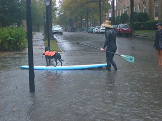 Paddle Boarding Dog in Hurricane Sandy | by doxella