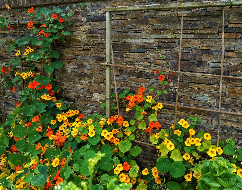 20160714-DSC02546 | Ireland, Dublin, National Botanic Garden… | Flickr