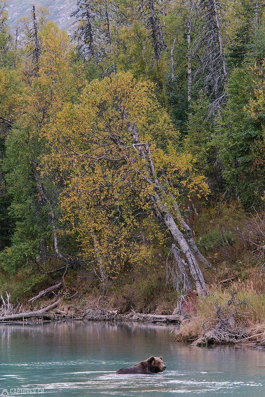 Swimming - Lake Clark National Park
