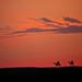 Sunset in Sam Sand Dunes, Jaisalmer, Rajasthan