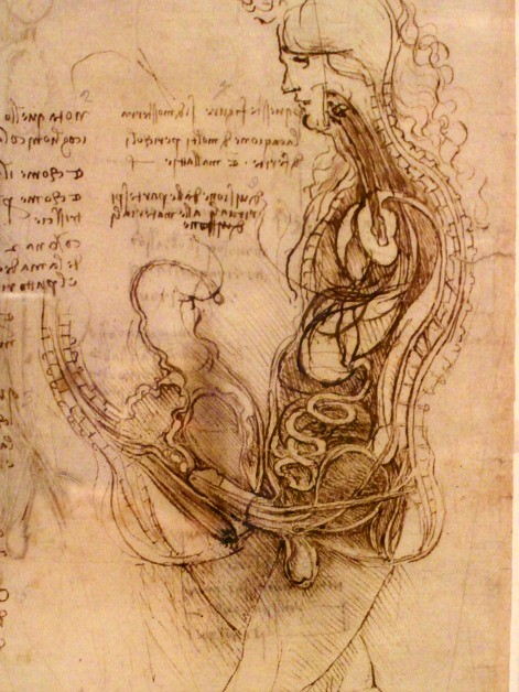 leonardo s anatomical drawings 1 of 4 one of the undoubte flickr