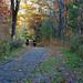 Sugar Hill State Park, NY