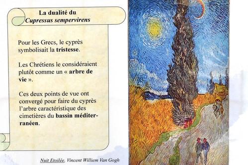Roter Fingerhut (Digitalis purpurea) - Giftpflanze am Wegesrand - Glycoside - Herzglycoside - Halluzinationen - verändertes Farbsehen - Vincent van Gogh