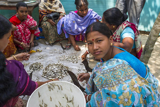 Women dry small fish in Bangladesh. Photo by Finn Thilsted, 2012. | by WorldFish