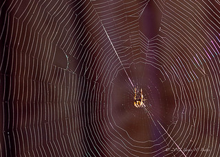 20121017 Tiny spider in early morning light | by Degilbo on flickr