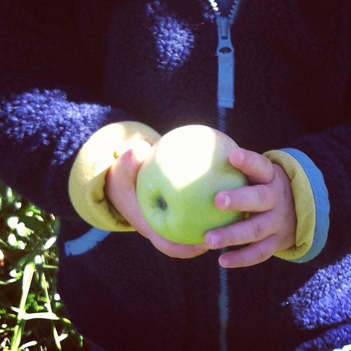 first apple picked, soon chomped on | by smitten kitchen