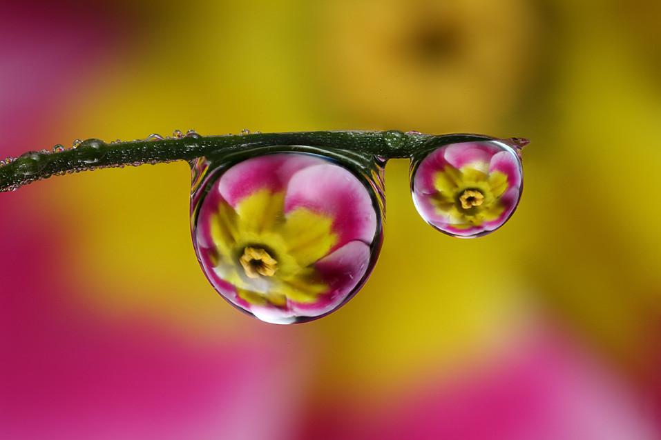 dewdropraindrop flower refraction 6 dewdropraindrop