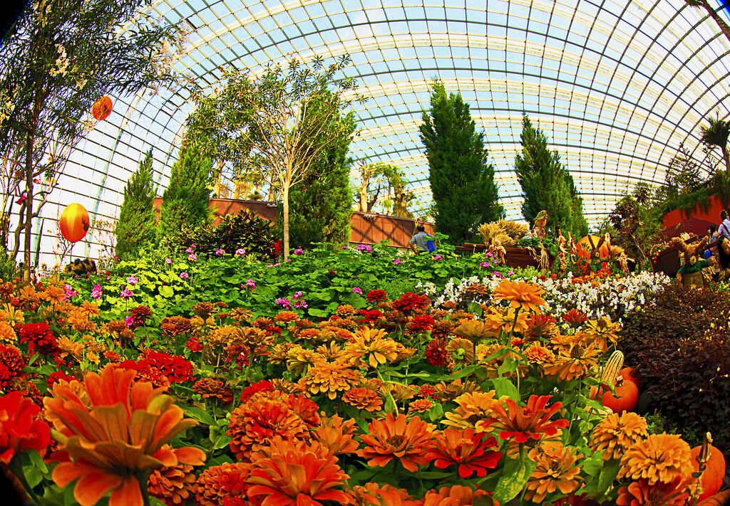 Flower dome at gardens by the bay singapore the cool dry flickr - Garden by the bay flower show ...