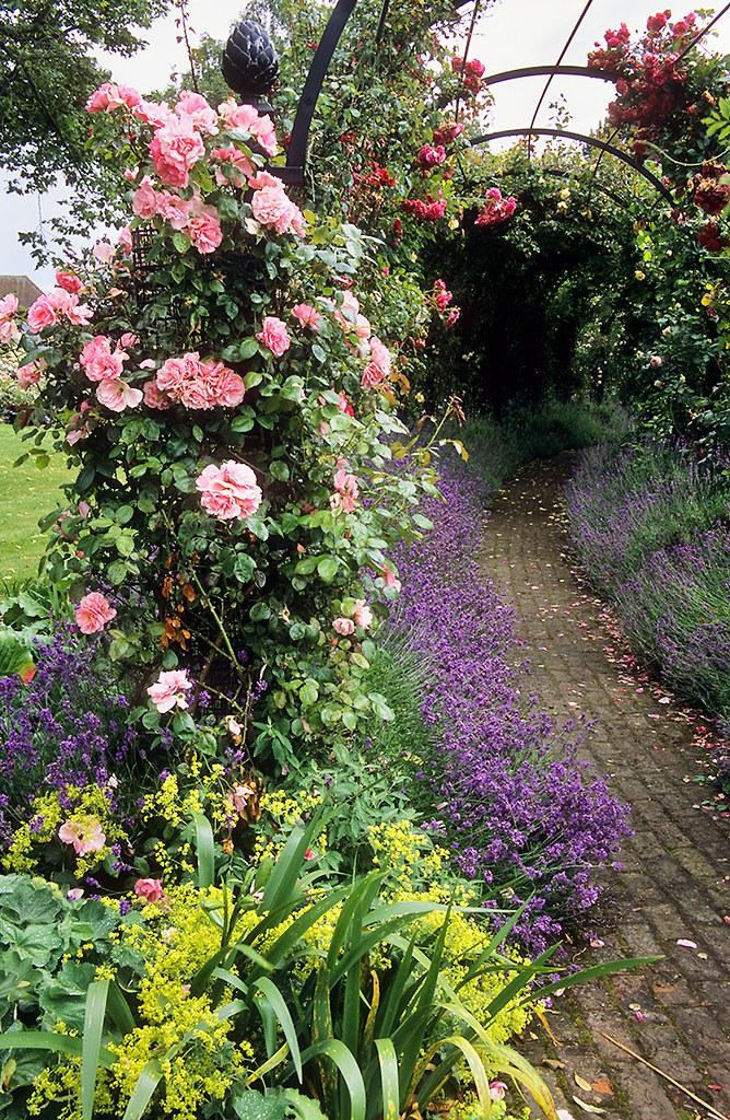 ... Hertfordshire Royal National Rose Society Gardens   Formerly U0027The  Gardens Of The Roseu0027, Hertfordshire