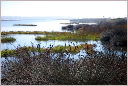 Bolsa Chica Wetlands in Irvine, CA