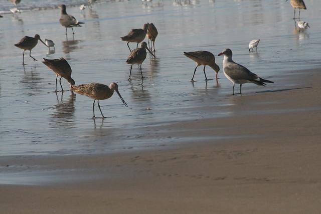 Manresa State Beach Surf Report