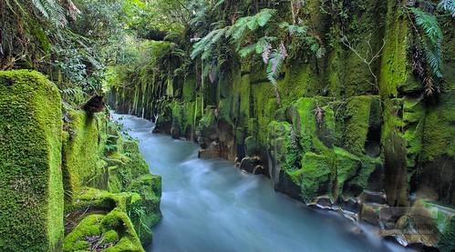 New Zealand Toi Toi Island