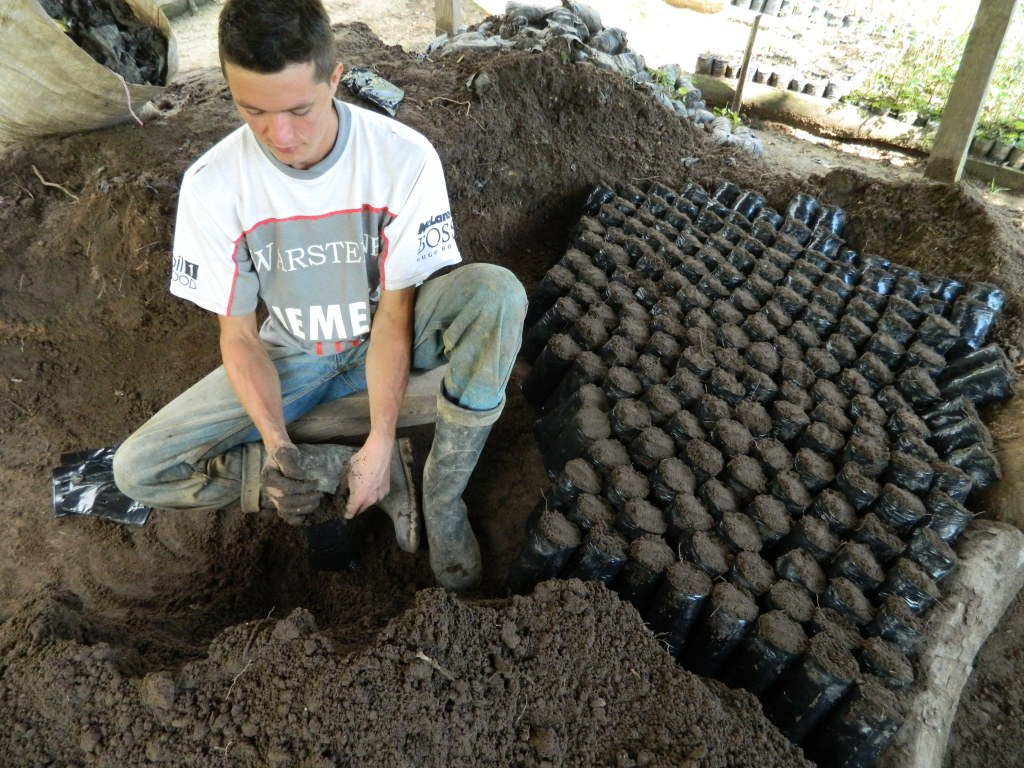 Llenado de bolsas con tierra para producci n de pl ntulas for Matas de viveros