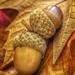 "HJackman_Week 43 - Theme: ""Brown"" Autumns Bounty"