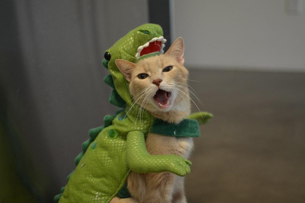 Cat Best Character Legend Of Heroes