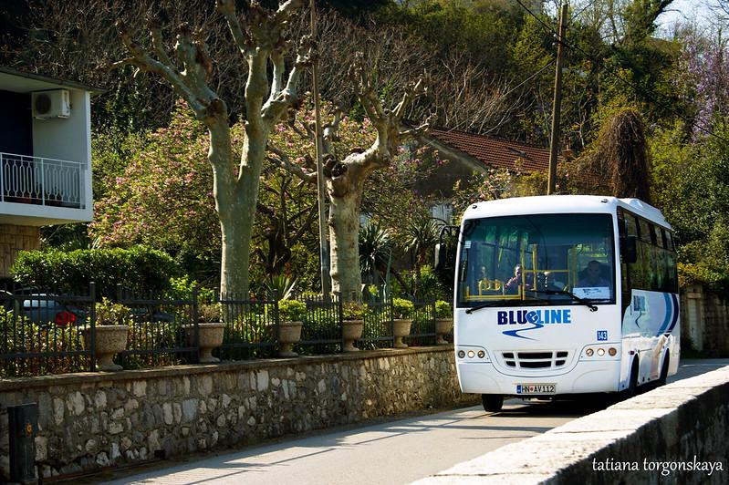 Автобус  Blue line едет в Котор