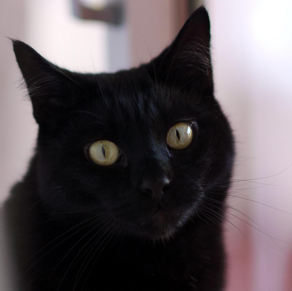 Cat Stare When Comr Home Late Meme