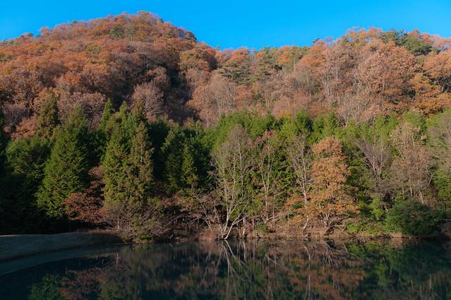 里山のため池